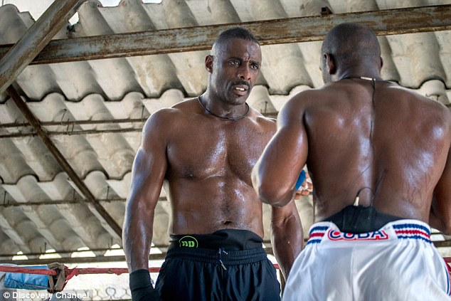 Idris Elba: Fighter- Idris looked well on his way to success, looking toned and sweaty as he stepped in the boxing ring for training in Havana's Rafael Trejo boxing gym in Cuba.